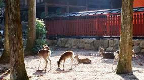 大元神社の鹿さん