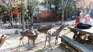 鹿に狙われたお弁当