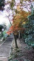 大元浦の石段