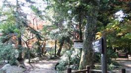 「弥山登山道「大元コース」