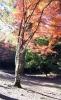 木比屋谷公園