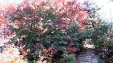 2-2 階段を上がると仁王門跡