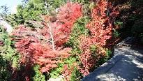4-5 御山神社へ