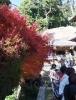 4-3-2 弥山本堂の紅葉