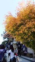 4-4 弥山本堂の紅葉