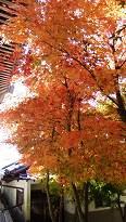 4-5 弥山本堂の紅葉
