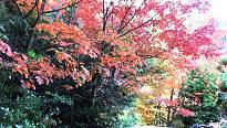 2-5紅葉が一番綺麗な場所
