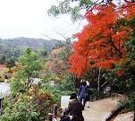 平松茶屋付近の道