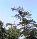 上はこんな感じの木です