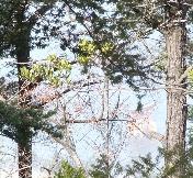 景色 遠くに鳥居が見える