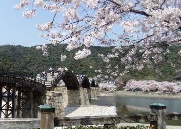 桜を入れて写真を撮る