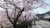 桜並木の傍を歩いてみました