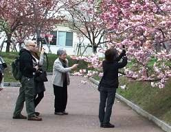 今年の花は「松月」