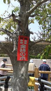 金持ちの木