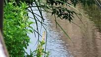 造幣局の用水路