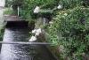 八木用水3−2