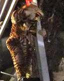 すごい虎です