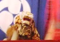 人食い虎です