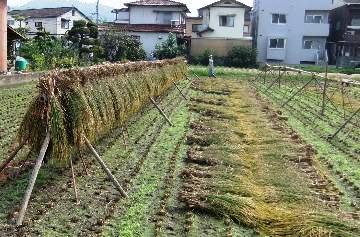 小学校前の田んぼ