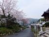 桜の季節山門へ