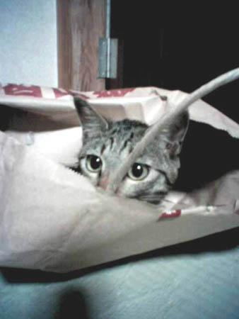オーロちゃんも袋好き