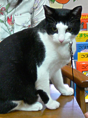 カリスマモデル猫、はっちゃん