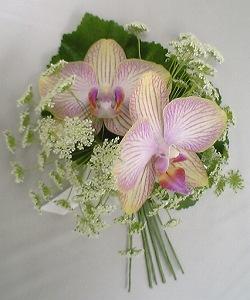 20051029 胡蝶蘭のコサージュ