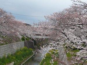 20090401 山崎川