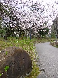 鶴舞公園(2011.4.2)