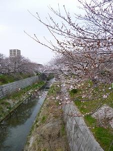 山崎川(2011.4.2)