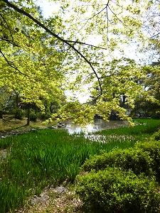 鶴舞公園(2011.4.13)