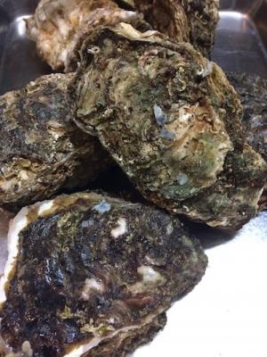 7月の岩牡蠣