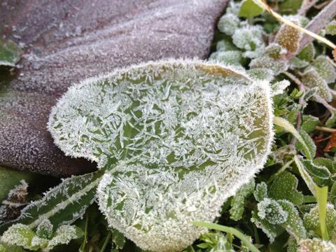 NossaBossaの新年。霜の降りた庭の草
