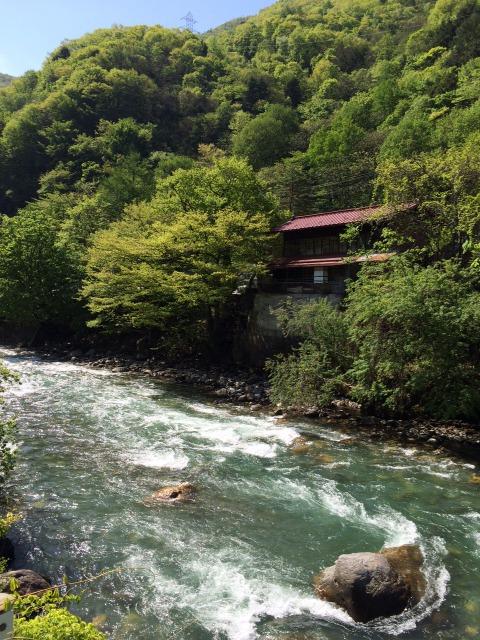渓流と新緑.JPG