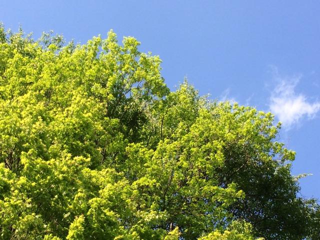 新緑の風景.JPG