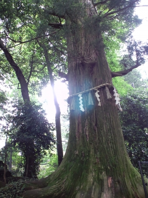 高尾山の木