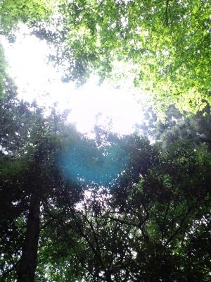高尾山・青い光