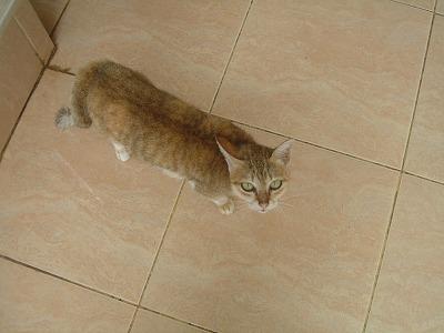 ツーリスト インフォメーションにいた猫