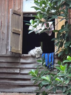 隣の家の猫