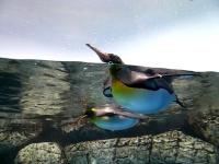 2008/09/14 シーパラ ペンギンさん。