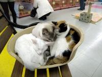 2009/03/20 にゃんだパーク。猫団子。