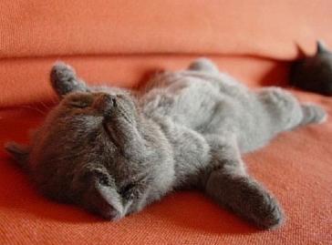 シャバーサナをする猫♪