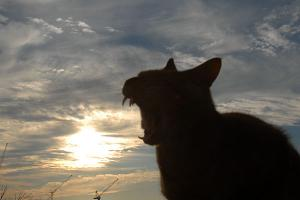 太陽にほえる猫(=^エ^=)