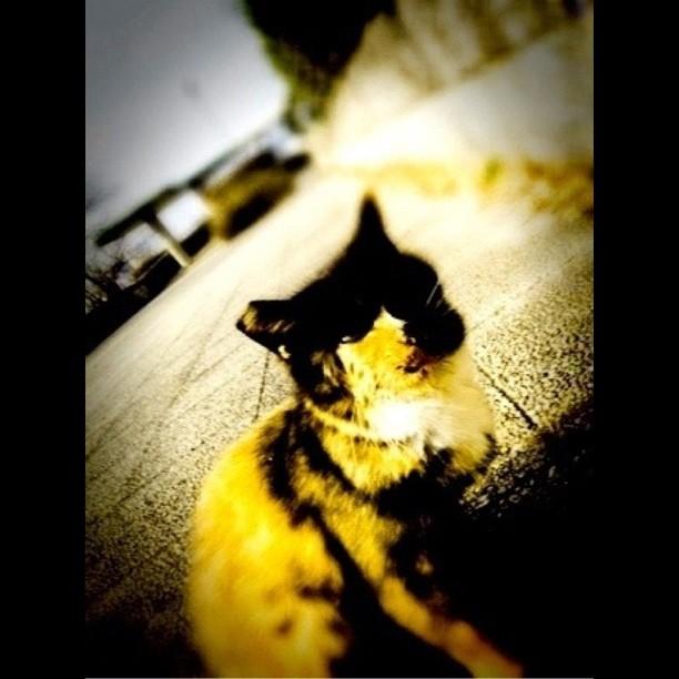 比治山のネコ