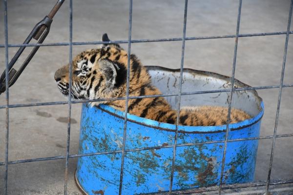 Zoo圧縮 (3).JPG