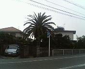 20070104_55710.jpg