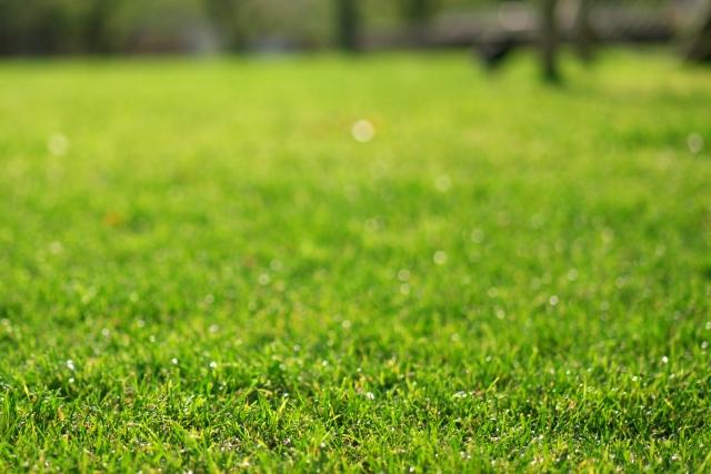 競馬場の美しい芝生