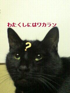 20081110234143.jpg