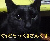 20081230115921.jpg