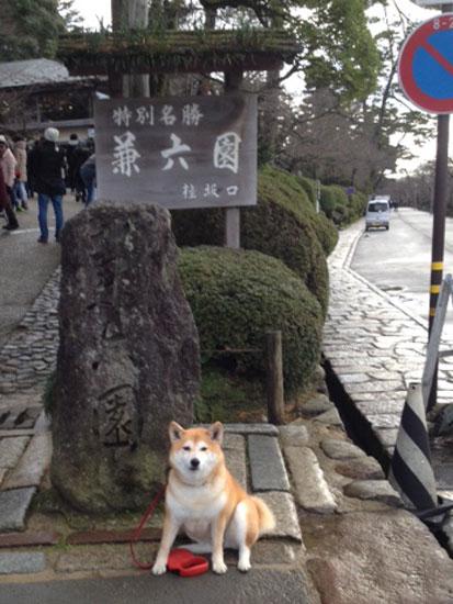 柴犬 ぷく 3